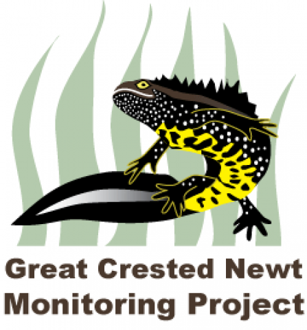 Great Crested Newt Logo